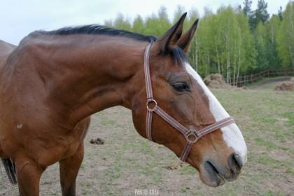 Konie, bunkry, psy, koty i... Kozy w Drwęcku